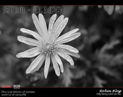 你拍攝的 20081116數位攝影_阿里山之旅300.jpg。