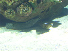 DSCN0250 (shabba53) Tags: valencia spain cathedral acquarium