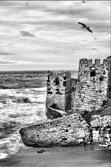 City Walls (Caucas') Tags: city b sea sky bw cloud mer seagulls black bird castle blancoynegro blanco
