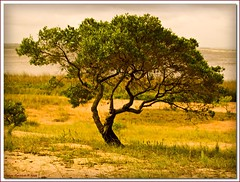 piegato dal vento (Andrea Rapisarda) Tags: tree nature uruguay photography photo wind natura gmt abigfave platinumphoto andrearapisarda olimpuse510