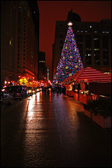 Daley Plaza Christmas Tree (Tom Gill.) Tags: christmas street holiday chicago tree downtown loop christmastree daleyplaza