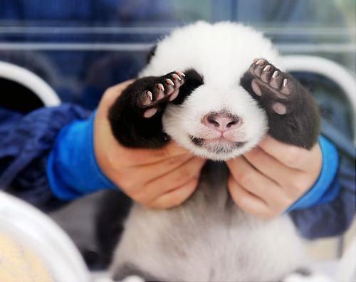 gal_baby_animal1