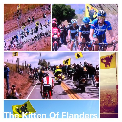 Kitten of Flanders Collage by Slonie