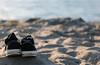 Summer. (Daniel.Lam) Tags: sea summer blur beach water field out photography 50mm blurry nikon focus shoes dof bokeh daniel 14 blurred sneakers converse alki shallow depth lam oof d40 daniellam of daniellamphotography