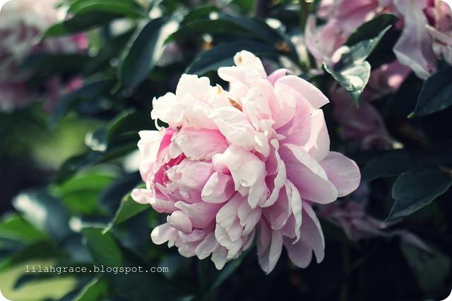 ornamental gardens, ottawa