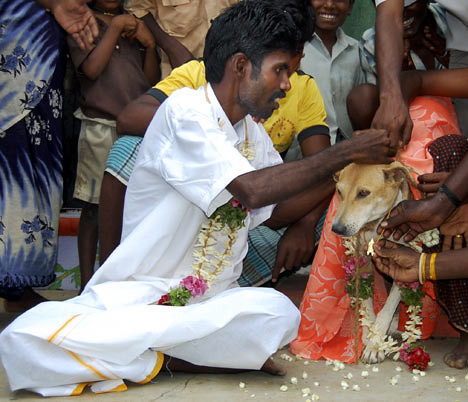 P. Selvakumar from Tamil Nadu, India ties the wedding knot on a female stray dog in a marriage ceremony