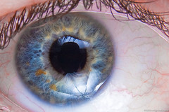 Leif's eye (neilcreek) Tags: blue iris man color colour macro reflection male guy eye closeup umbrella studio friend flash flecks leif pupil