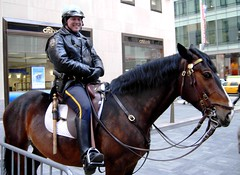 New York (Just Back) Tags: nyc horse ny newyork smile pose boot gun stripe rockefellercenter police bank cop mounted friendly stick knee today equestrian citibank saddle mane 49th todayshow stirrup reins