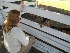 Kelsey Creek Farm Goat