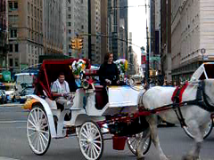 Hansom cabs entering Central Park (Jim Lambert) Tags: nyc newyorkcity horses usa ny newyork us video spring unitedstates centralpark manhattan centralparksouth 2008 cps videos 6thavenue 6thave carriages sixthavenue sixthave centralparks w59thst horsedrawncarriages hansomcabs april2008 horsecarriages spring2008 west59thstreet centraldrive w59thstreet 10april2008 april102008 04102008 centraldr