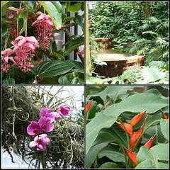 Botanical Gardens Mosaic