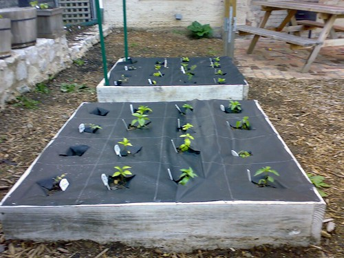 Mini Square Foot gardening