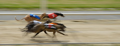 Greyhound Racing at The Stow 3 (peterphotographic) Tags: walthamstow greyhoundracing thestow