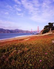 Golden Gate Bridge from Baker Beach #1 (wanderingYew2 (thanks for 5M+ views!)) Tags: sanfrancisco california bridge mamiya film beach mediumformat goldengatebridge wildflower bakerbeach presidio us101 filmscan pacificcoasthighway californiahighway1 ca1 mamiya7ii nationalscenicbyway allamericanroad unitedstateshighway101