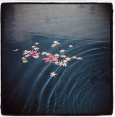 flowers and ripples (Claire Marie Vogel) Tags: camera pink flowers blue 120 film water pool square toy claire holga pretty turquoise jasmine border medium format serene ripples vogel sloppy