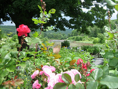 gardenshop4