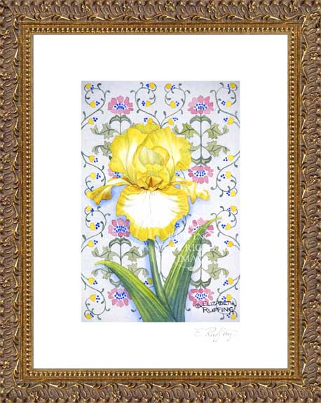 Yellow and White Iris by Elizabeth Ruffing Framed Print