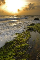 Fast and sharp (Vishkid) Tags: sunset color beach sand waves lichen srilanka burnout breeze experimenting crowded neutral gettingwet mtlavinia