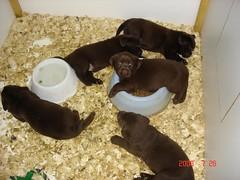Mud's pups at 4 weeks