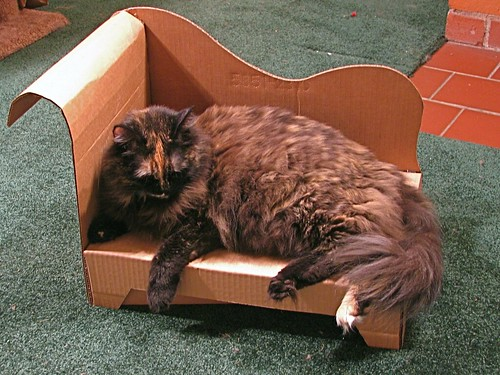 Harley Sleeps : cat chaise lounge - Sectionals, Sofas & Couches