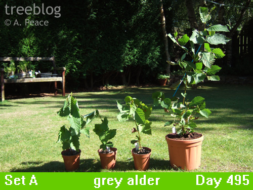 grey alders Nos. 1, 2, 3 and 4