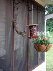 squirrel pilates