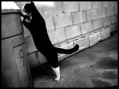 Puma (fanny.girly) Tags: trash cat nine hungry