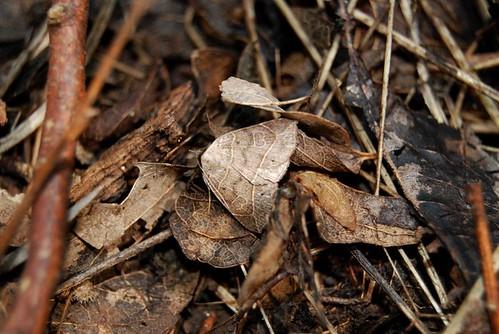 I Am A Leaf On The Ground