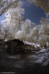 """Orang Asli"" Village (Infrared) (2121studio) Tags: tree nature ir nikon d70s ali malaysia infrared indah kuantan alam pokok blueribbonwinner cherryontop pekan tasikchini flickrsbest abigfave anawesomeshot visiongroup convertedinfraredcamera 2121studio kuantanphotographer pahangphotographer ciptaanallahswt malaysianinfraredphotographer lakehini"