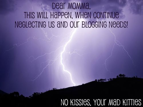 no kissies - mad kitties