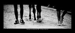 C' qualcosa che non torna.. (Ariel O Gonzalez) Tags: bw ariel caballos teatro nikon italia humor cavalli velo piedi biancoenero d300 prove f75 nikond coloreselettivo