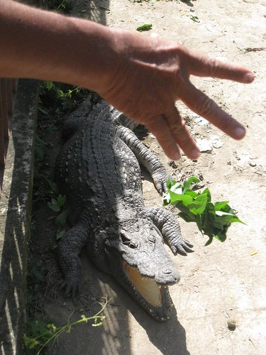 Fun with Cambodian crocodiles
