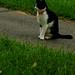 half cat tail half tail cat