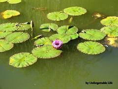 (Unforgettable Life !! since 2008) Tags: life trip flower tree nature taiwan       unforgettable  puli  puri   nantou