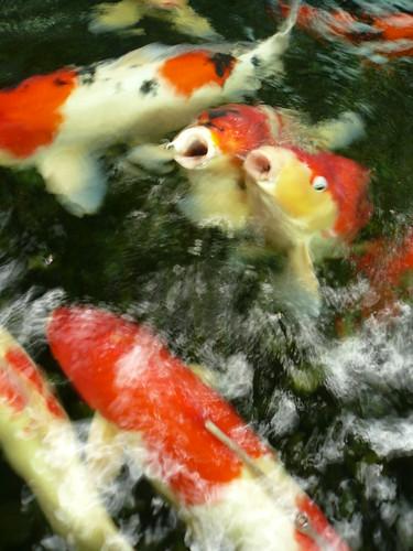 blog voyage travel singapour aeroport poissons