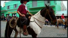 1555.200908 - CAAPAVA DO SUL (darlancorral) Tags: desfile cavalo caapavadosul gacho farroupilha 1555200908