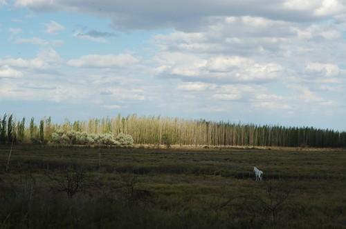mendoza2008 30