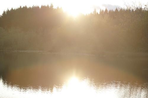 Sunlight Shore