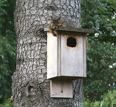 home squirrel hillsboro