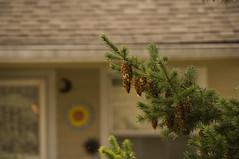 fern on my backyard (tyesturrmuffetti) Tags: rose washington chester tacoma ferns natures warmcolors pointdefiance