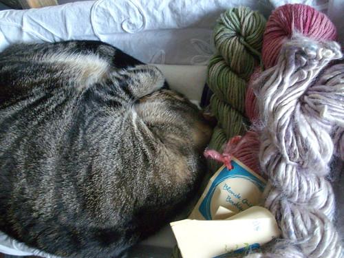 Stella in the yarn basket - 1/365