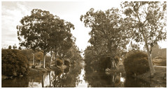 Rio Rons (franes) Tags: rio rons