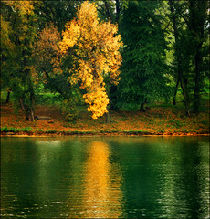 Mirror (Katarina 2353) Tags: wood autumn trees lake color reflection tree green film nature water yellow forest landscape photography gold ada nikon europe flickr image earth lac paisaje belgrade paysage priroda beograd paesaggio srbija tjkp serbie ciganlija pejza katarinastefanovic katarina2353 gettylicence