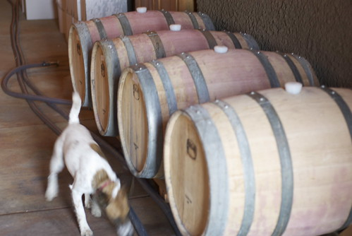 Now we go into the wine cave to check on the other varietals that are aging in oak. Quick, check for lizards!