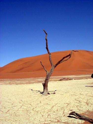 Árbol en medio del desierto