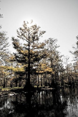cypress desat