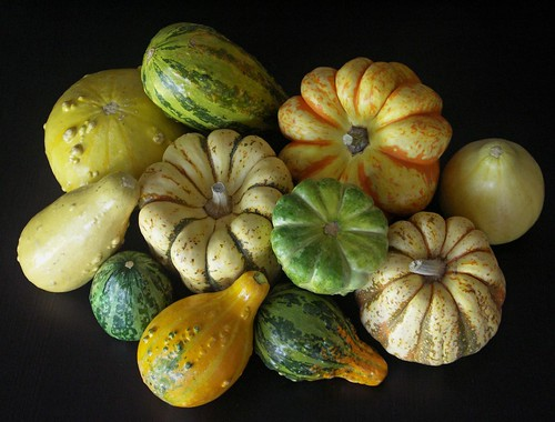 Squashes on black