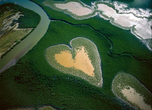 Mangrove Heart by Arthus-Bertrand by you.