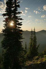 Glacier View (Tony Pulokas) Tags: sunset summer tree 1 washington lensflare fir mountranier goatlake mtranier gobblersknob subalpinefir glacierviewwilderness goldenvisions