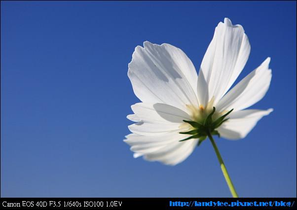 9711-新社花海:Date with Bee_070.jpg